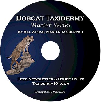 Bobcat Taxidermy DVD