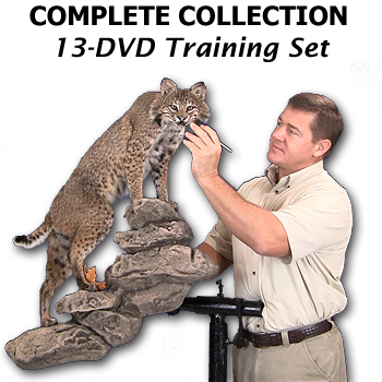 13 DVD How To Taxidermy Course