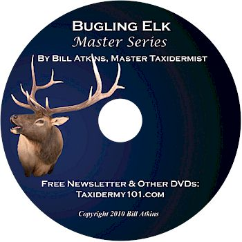 Bugling Elk Taxidermy DVD