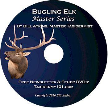 Bugling Elk Taxidermy DVD