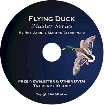 Flying Duck Taxidermy DVD