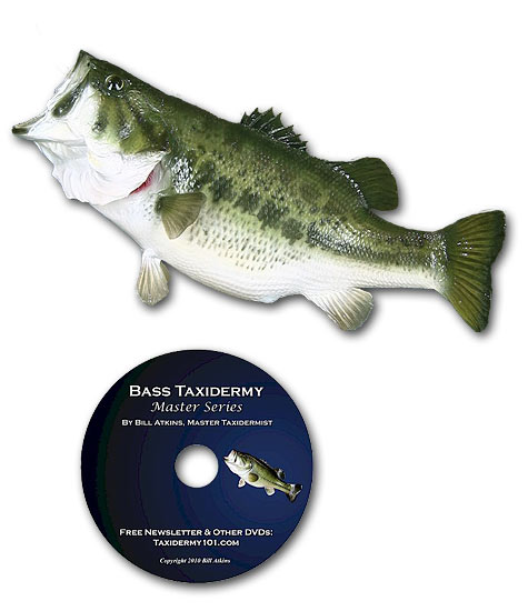How To Taxidermy Fish Fish Taxidermy Video On Dvd Learn