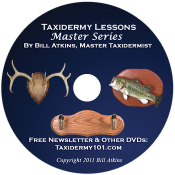 3 Taxidermy Lessons