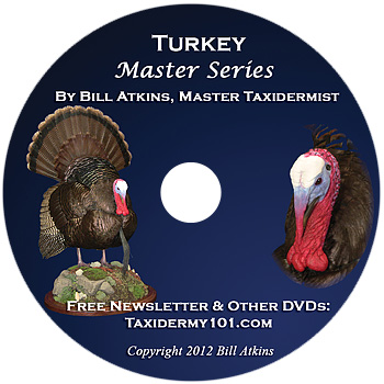 Turkey Taxidermy Training DVD