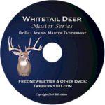whitetail_3